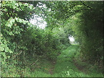 SS7509 : Footpath along access to North Leigh by Sarah Charlesworth