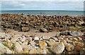 T1203 : Rocky Coast Near Carnsore Point by Mary and Angus Hogg