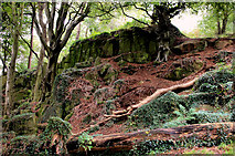J4772 : Old quarry, Killynether Wood by Albert Bridge
