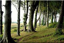 J4772 : Path and trees, Killynether Wood by Albert Bridge