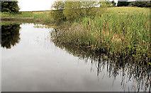 J4772 : Pond, Killynether Wood by Albert Bridge
