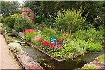SJ7243 : Water garden at Bridgemere by Steve Daniels
