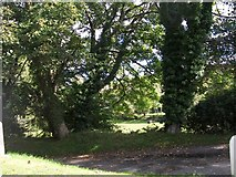 SH2332 : Woodland at the western outskirts of Sarn by Eric Jones