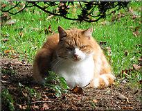 TM5286 : The Kessingland church cat by Evelyn Simak