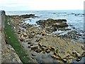 NZ5333 : Rocks below Seawall, Headland by Paul Buckingham