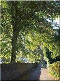 SX9364 : St Matthias Church Road by Derek Harper