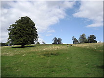 TQ5344 : Hill above Well Place Farm by Chris Heaton