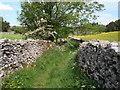NY7204 : Hobars Lane in June, Ravenstonedale by David McMumm