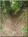 SO3616 : Path south of Llanvetherine by Trevor Rickard