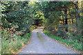 NJ3163 : Farm road into Poundler's Wood by Steven Brown