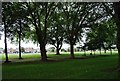 TQ2475 : Trees in Wandsworth Park by N Chadwick