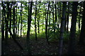 SD7313 : Woodland by the Jumbles Reservoir dam by Bill Boaden