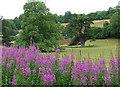 ST9232 : Parkland near Fonthill Bishop (1) by Stephen Richards