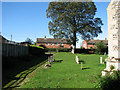 TF6923 : All Saints' church in Roydon - churchyard by Evelyn Simak