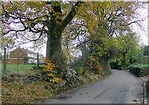 SO9095 : Manor Road in Penn, Wolverhampton by Roger  Kidd