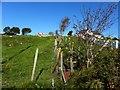 B8202 : Galwolie Townland by Kenneth  Allen