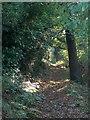 SK3382 : Path through Hutcliffe Wood by Neil Theasby