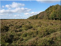 ST1116 : Black Down Common by Derek Harper
