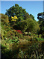 TQ2587 : Water garden, Golders Hill Park, London NW11 by Julian Osley