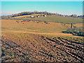 SO3816 : Farmland at Newordden Farm by Trevor Rickard