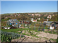 TQ3602 : Allotment off Sheep Walk by Oast House Archive