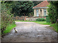 TG1340 : Siamese cat prowling in Allotment Lane, West Beckham by Evelyn Simak