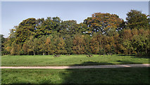 SJ8959 : Autumn colours by Jonathan Kington