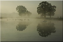 SO8844 : Swans silhouetted on Croome River by Philip Halling