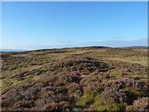 SH8414 : The summit 'ridge' of Foel Dinas by Richard Law