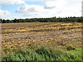 TG3412 : View across stubble field towards Walsham Wood by Evelyn Simak