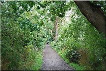 TQ1776 : Thames Path, Syon Reach by N Chadwick