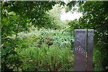 TQ1776 : Richmond Old Deer Park by N Chadwick
