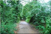 TQ1776 : The Thames Path by N Chadwick