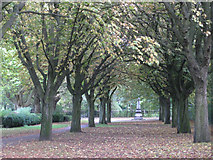 SP0683 : Avenue to the Scouts' Cenotaph, Cannon Hill Park by Robin Stott