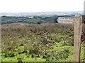SS8230 : Bridleway to Brimblecombe by Sarah Charlesworth