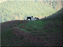 SH8115 : Horses on the side of Maen Du by Richard Law