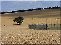 SU7348 : Farmland, Long Sutton by Andrew Smith