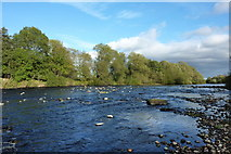 NZ2313 : The River Tees near Manfield Scar by A Chilton