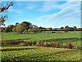 NZ3115 : Field Near Haughton le Skerne by Paul Buckingham