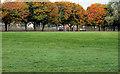 J3473 : Ormeau Park, Belfast (18) by Albert Bridge