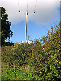 TM3995 : Electricity line above hedge by Evelyn Simak