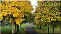 J3573 : Trees and path, Ormeau Park, Belfast by Albert Bridge