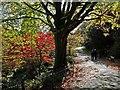 ST3087 : An autumn stroll in Belle Vue Park by Robin Drayton