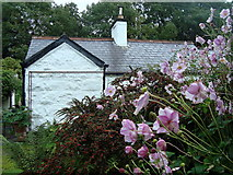 G7576 : Railway cottage at Bruckless by louise price