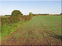 SJ9513 : Arable land beside Mansty Lane by Richard Webb