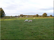 SU1070 : Sheep grazing with the Avebury Stone Circle by Eirian Evans