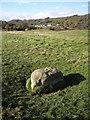 SK2275 : Eyam  Boundary Stone by Graham Hogg
