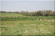 TQ5203 : Embankment along the River Cuckmere by N Chadwick