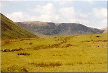 NT1611 : Rough grazing at Carrifran by Sarah Charlesworth