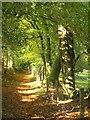 SX7878 : Templer Way near Yarner Lodge by Derek Harper